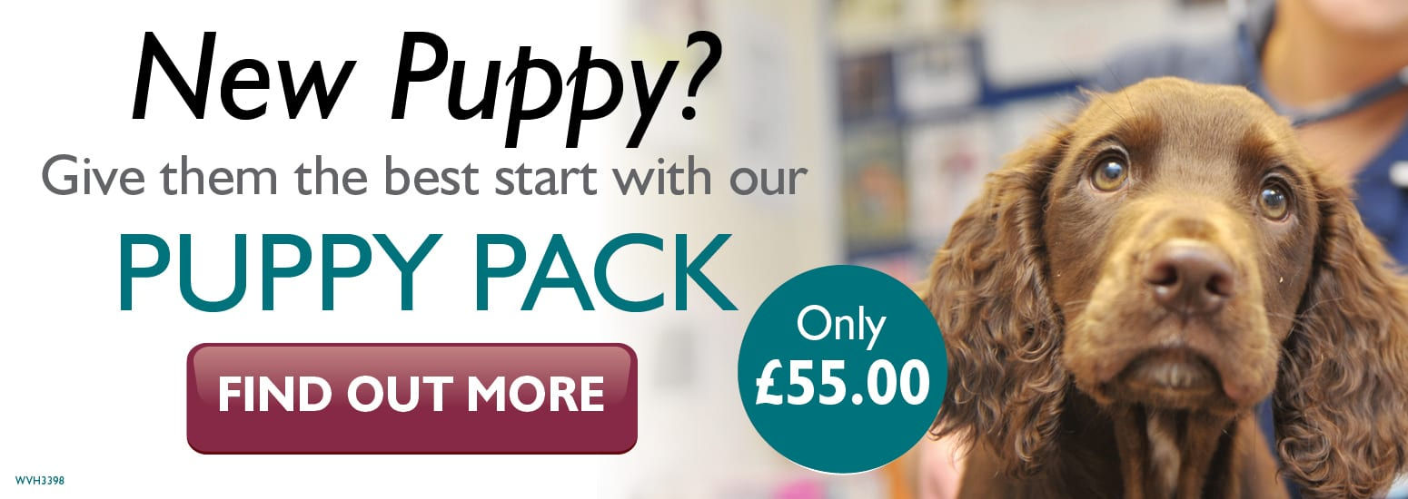Puppy Pack covering puppy injections, flea & worm treatment and much more at Beech House Vets in Warrington