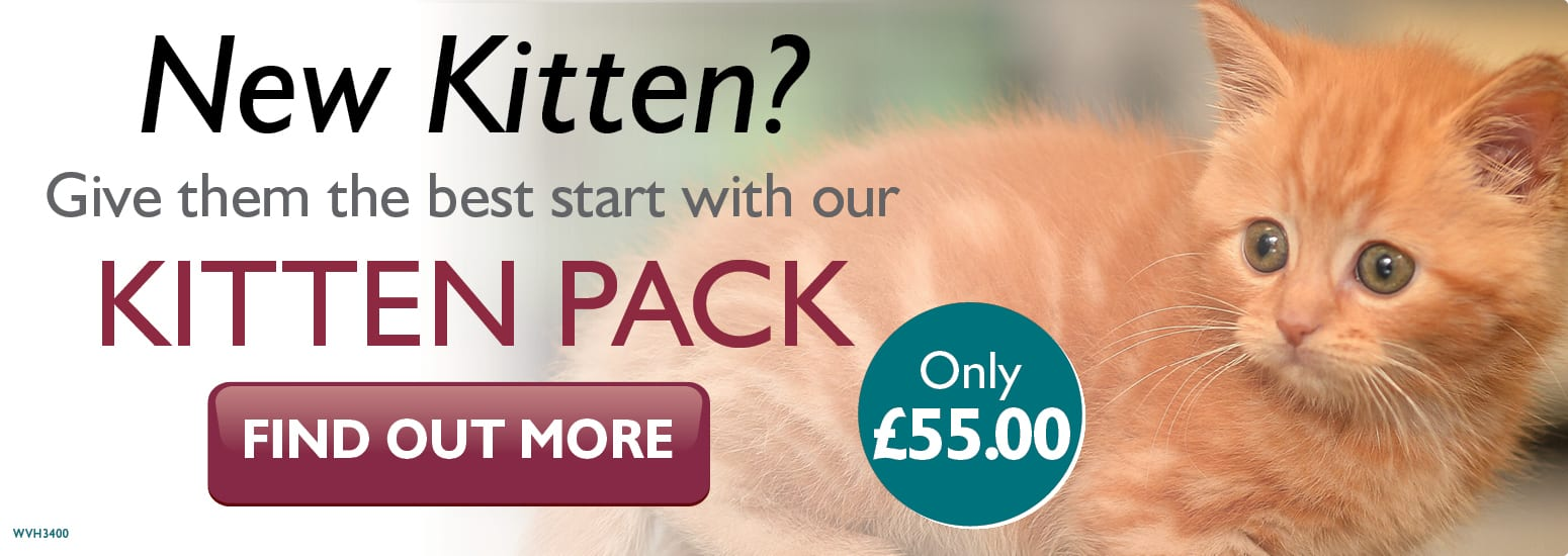 Kitten Pack covering kitten injections, flea & worm treatment, and much more for only £55 at vets in Warrington