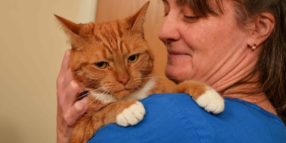 Kitty with veterinary surgeon Ann Mee